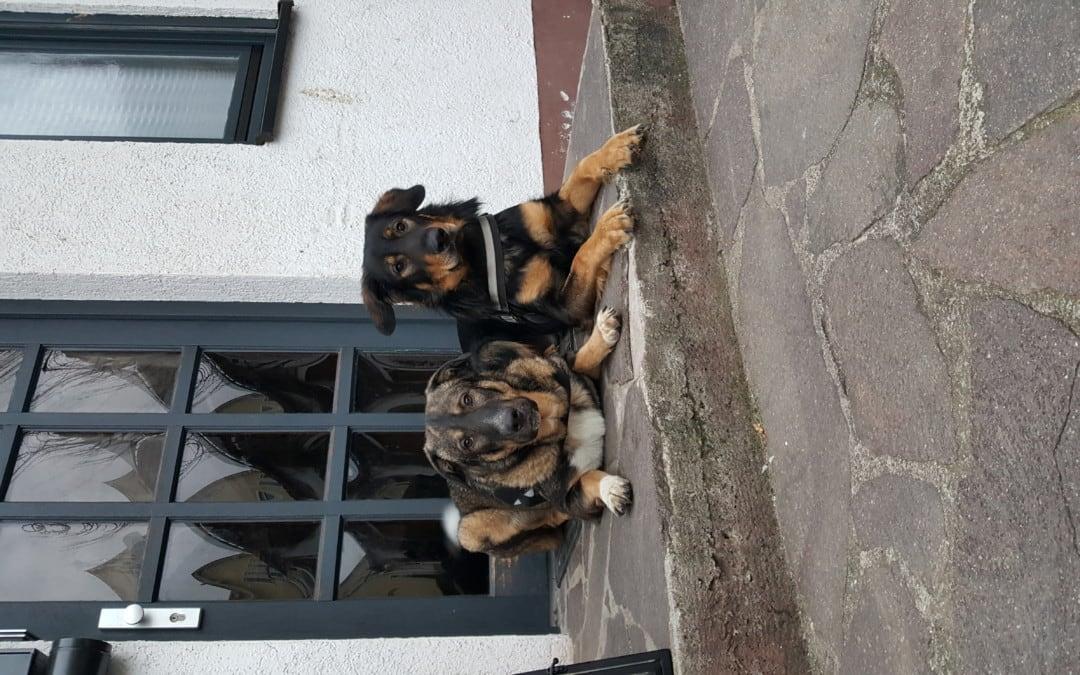 Hunde Foto: Grabner und Atilla und Tyson – Keiner kommt rein