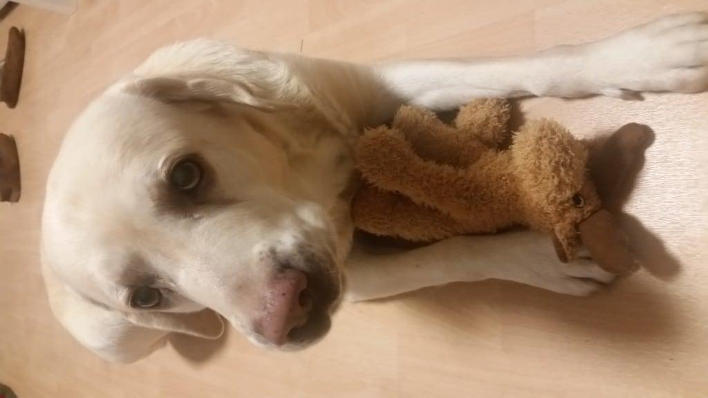 Hunde Foto: Oliver und Lucky - Freude übers Weihnachtsgeschenk