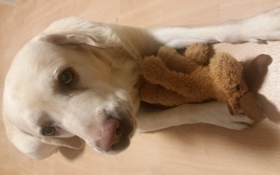 Hunde Foto: Oliver und Lucky – Freude übers Weihnachtsgeschenk