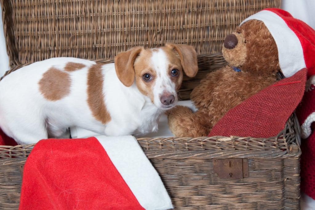 Hunde Foto: Sabrina und Charly - Mein Fotomodell