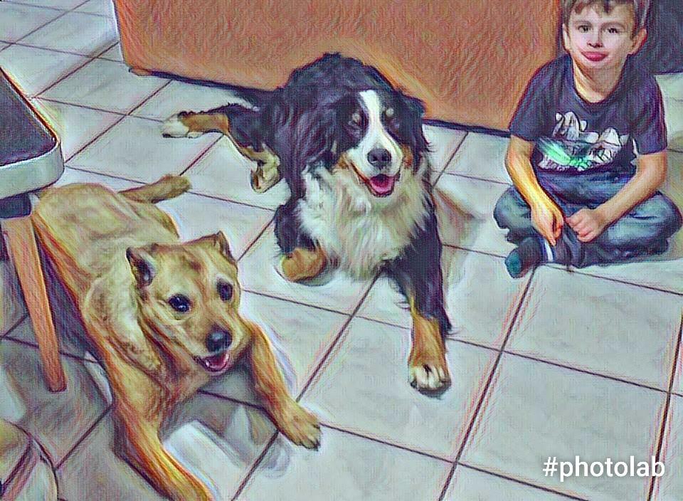 Hunde Foto: Manuela und Laika und Joy - Einmal gesehen und Freunde für immer