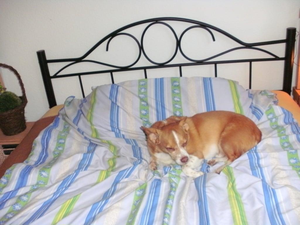 Hunde Foto: hildegard und BOBBY - meine süsse maus --15 jahre alt