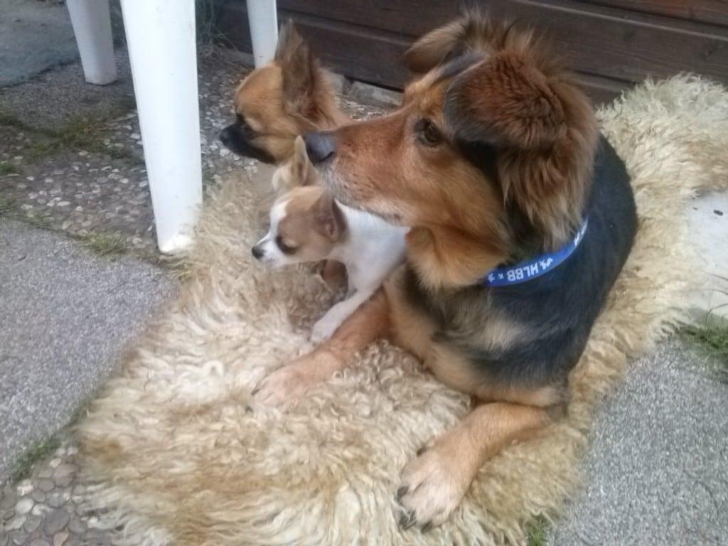 Hunde Foto: evi und meine hundis - dort war doch was