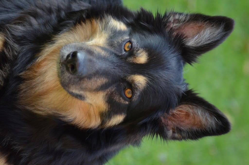Hunde Foto: Manfred und Anka - Meine Partnerin
