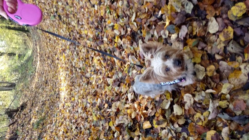 Hunde Foto: Sabrina und Nelly - Nelly unsere kleine Zicke ;-)