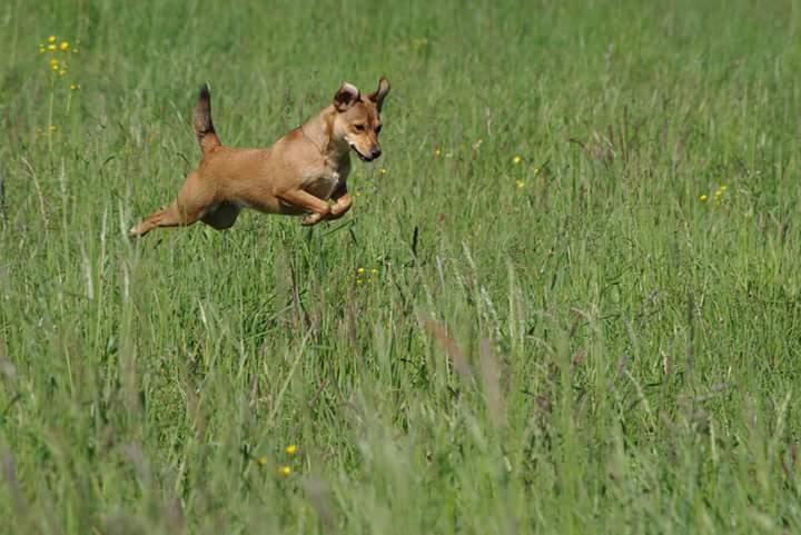 Hunde Foto: michael und ambra - flugund