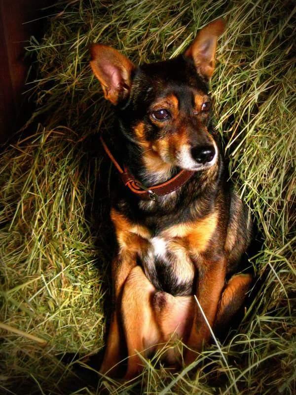 Hunde Foto: Silvia und Teddy - 19 Jahre und kein bisschen weise