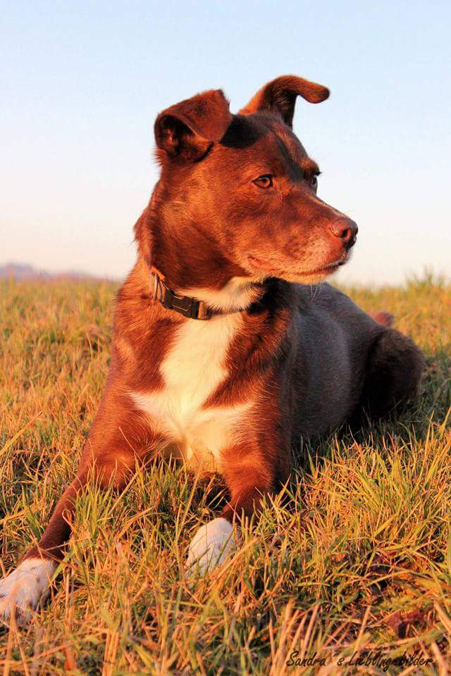 Hunde Foto: Andrea und Maggy - Ich liebe das grüne Gras und die Sonne