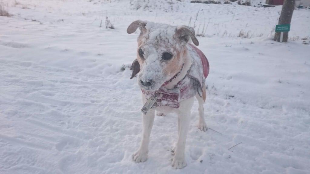 Hunde Foto: Marilena und NICKI - Nicki liebt es im Schnee zu toben,,