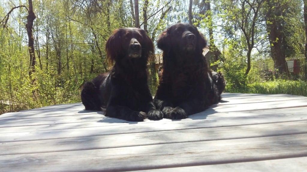 Hunde Foto: Susanne und Sammy und Paula - Sammy und Pauli im Sommerurlaub