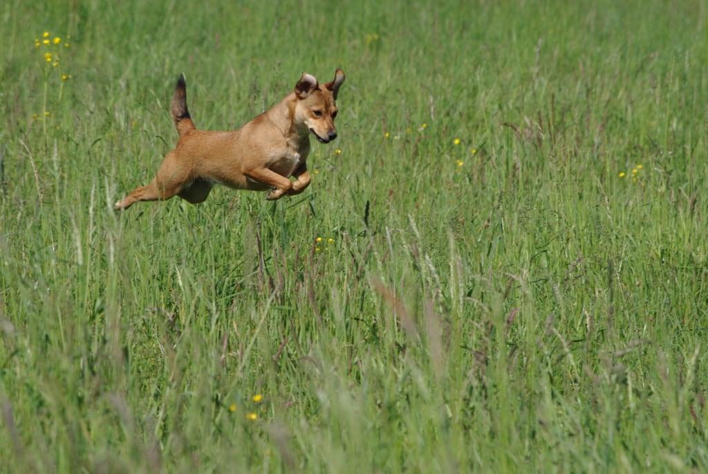 Hunde Foto: Michael und Ambra - Flughund