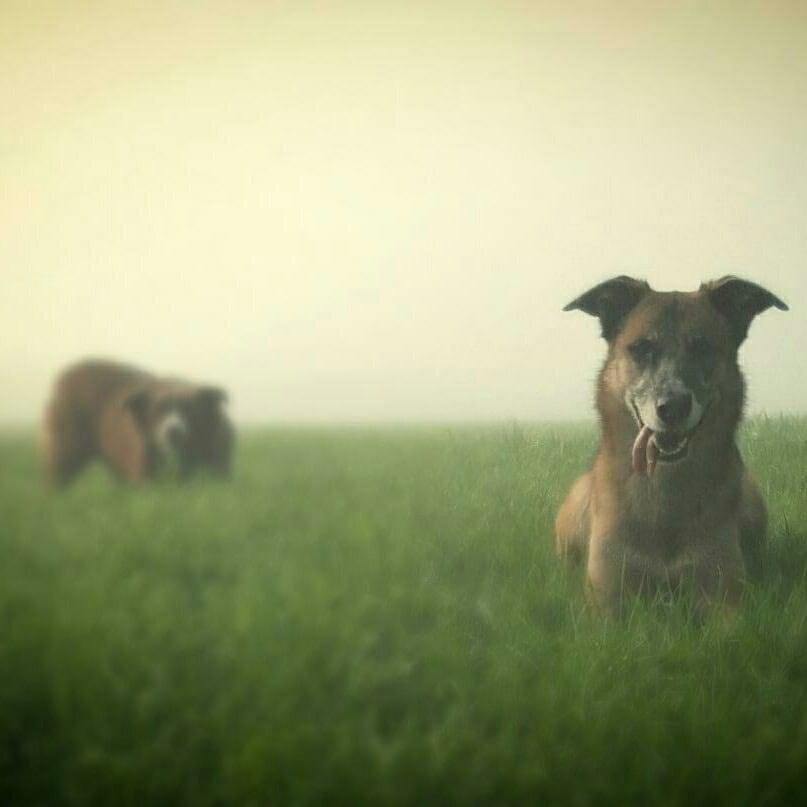Hunde Foto: Martina und Shila & Shoco - Meine wilden Verrückten :-)