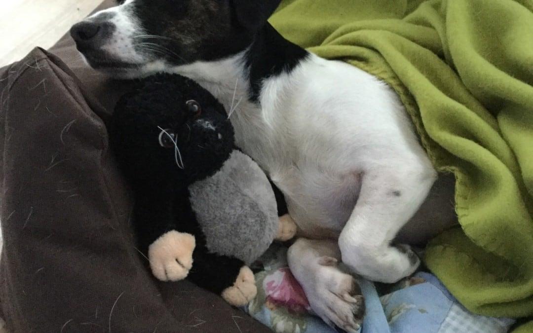 Hunde Foto: Frank und Skyler – Kuschelstunde