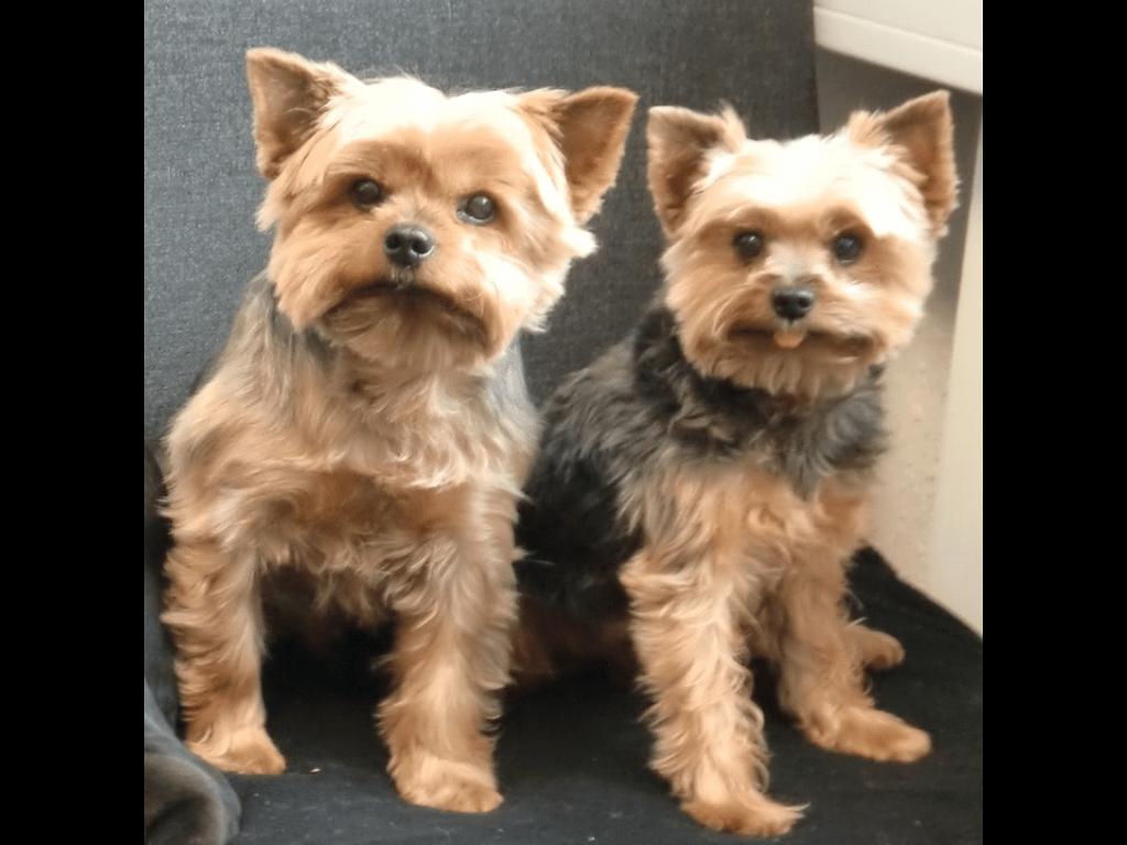 Hunde Foto: Jessica und Joey & Benji - Mein Leben
