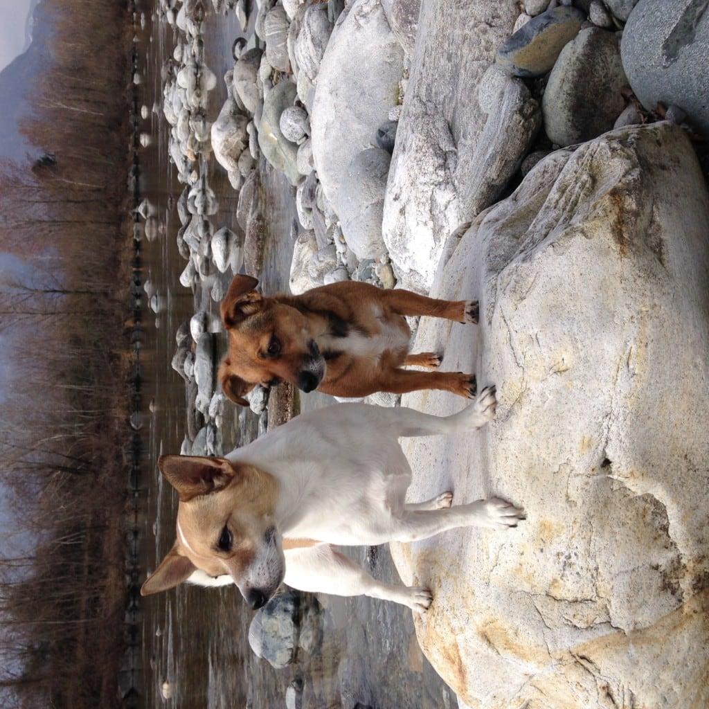 Hunde Foto: Gaby und Gino & Mary - Hier oben hat man den Überblick
