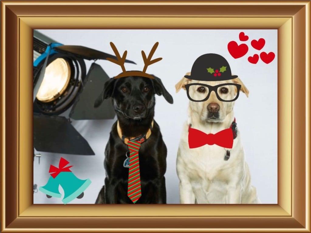 Hunde Foto: Mario und Lea und Meggie - Unsere Firmenhunde sind Sie nicht lieb ?