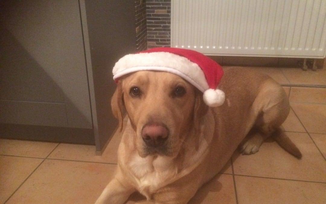 Hunde Foto: Melanie und Flash – Frohe Weihnachten