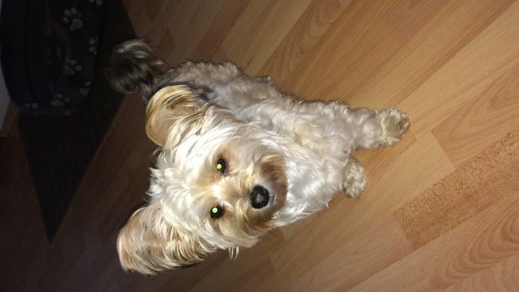 Hunde Foto: Diana und Maya - Mein Sonnenschein