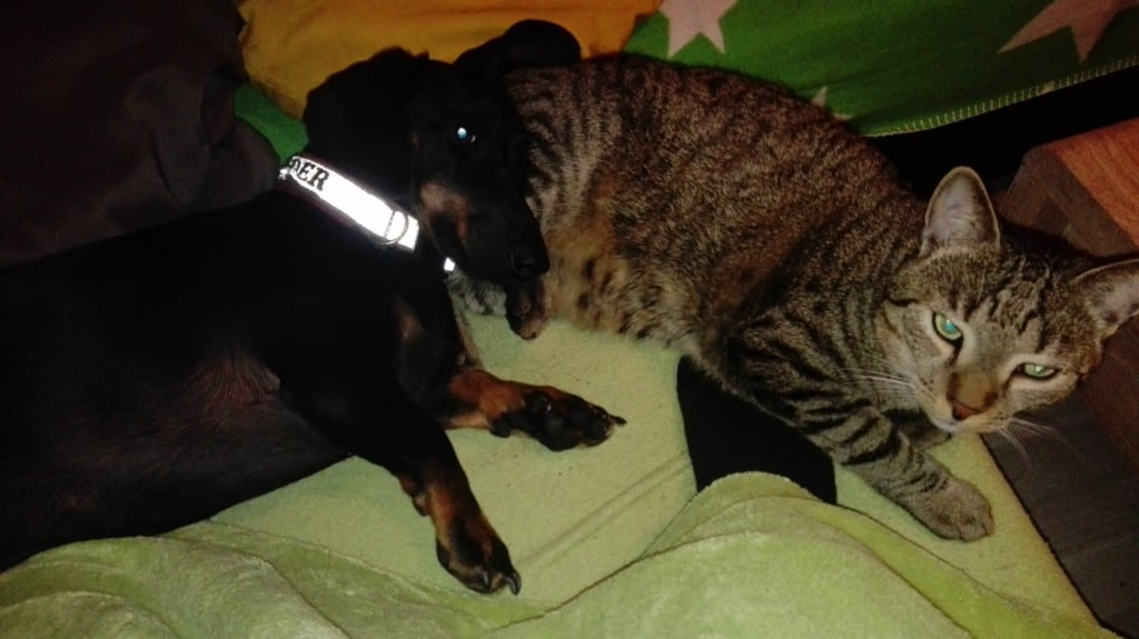 Hunde Foto: Michaela und Vader mit Chewie - Relax