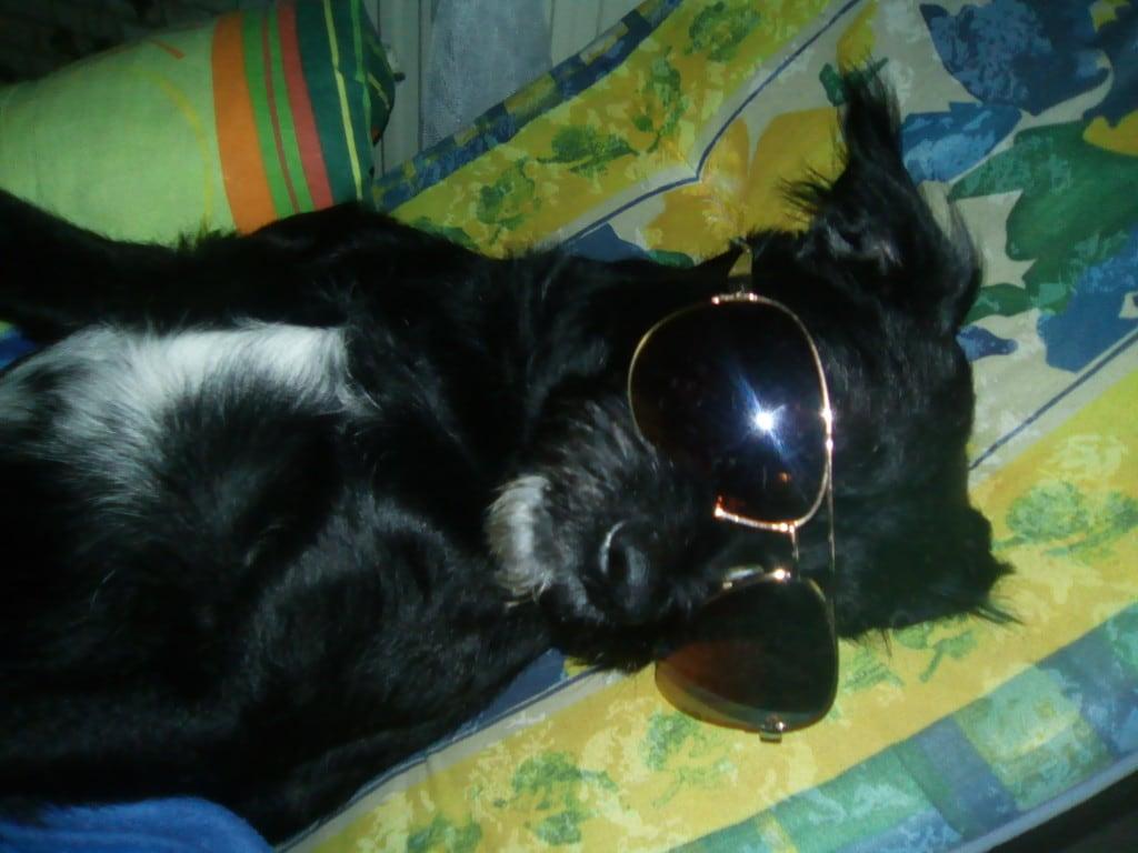 Hunde Foto: Doris und Boomer - Auch Hunde können relaxen.