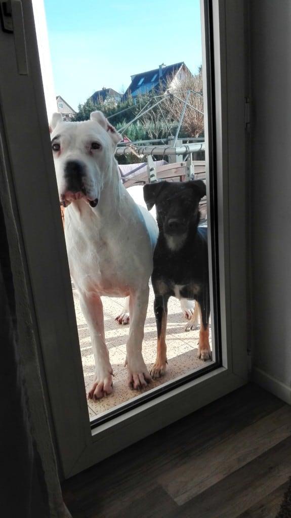 Hunde Foto: Sylvie und Whoopie und Diego - Ying und Yang