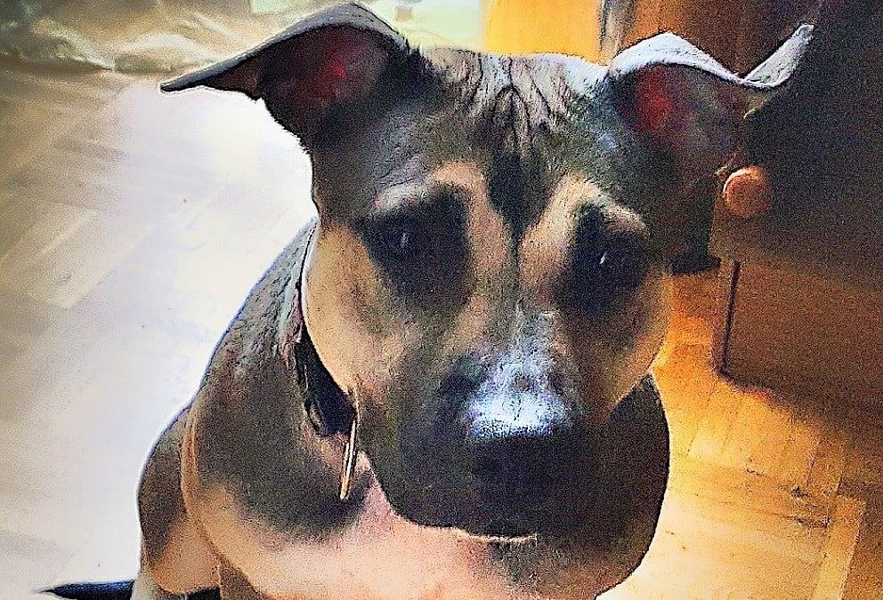 Hunde Foto: Isabella und SHIVA – Kuschelmonster ?
