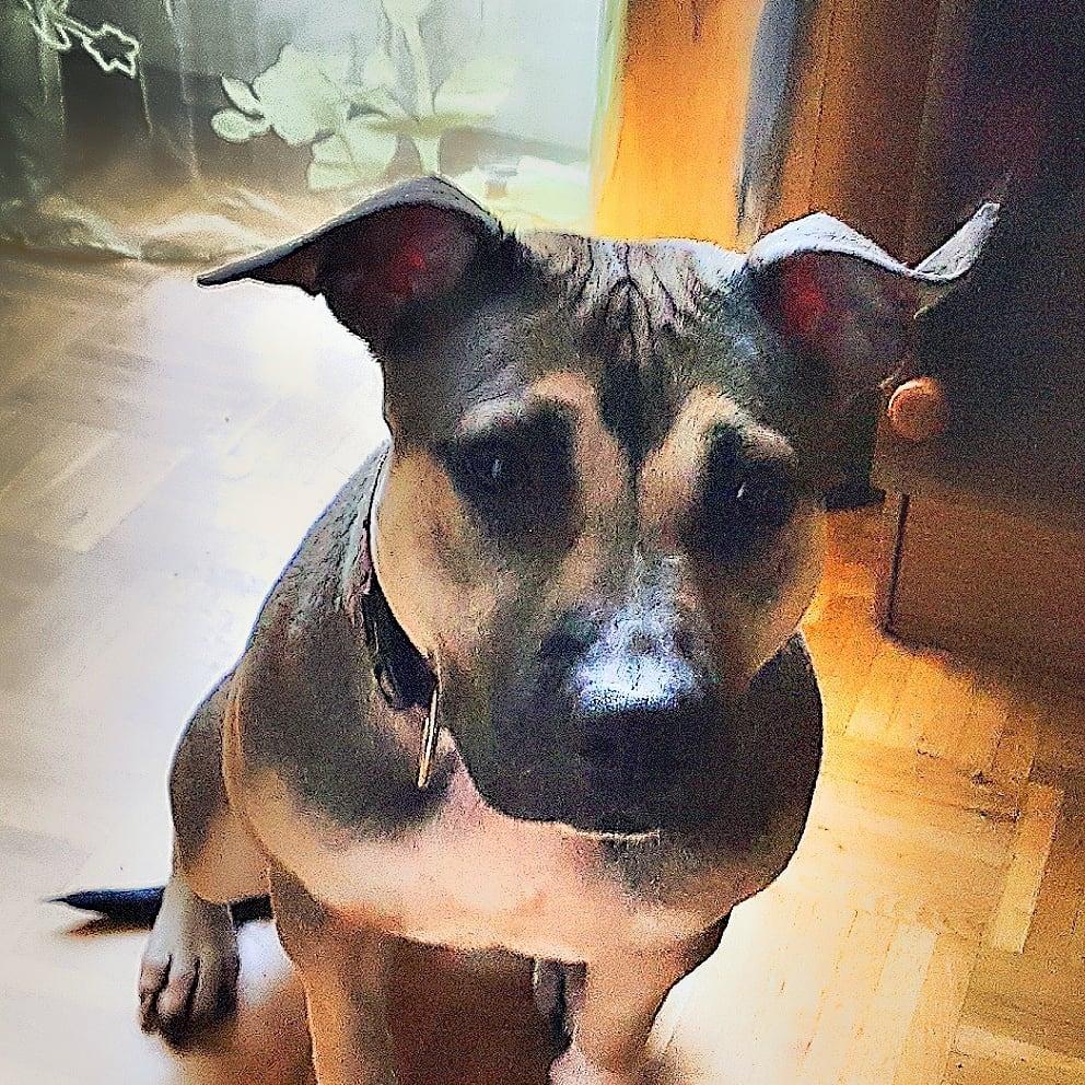 Hunde Foto: Isabella und SHIVA - Kuschelmonster ?
