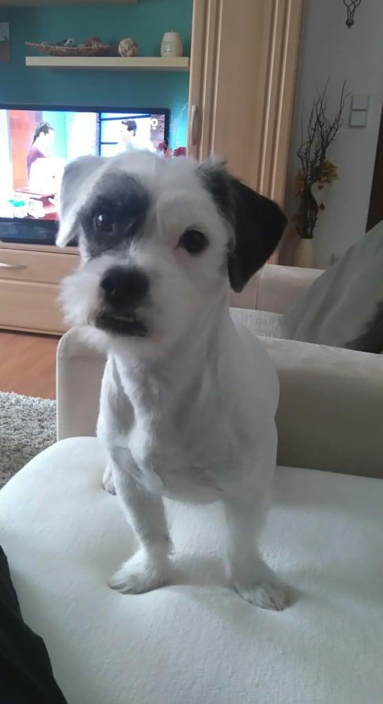 Hunde Foto: Monika und Calli - Mein Liebling