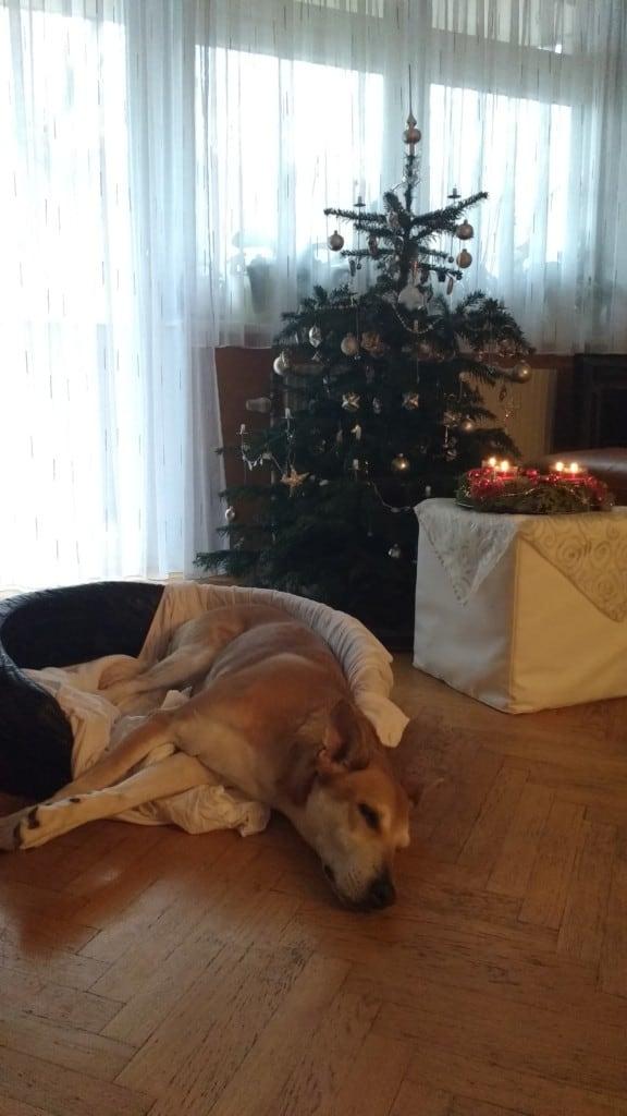 Hunde Foto: Brigitte und Kira - Das Familienfest war ganz schön anstrengend