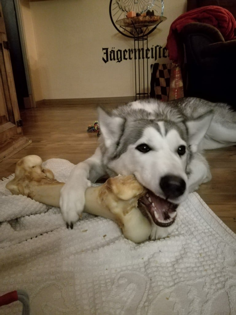 Hunde Foto: Katharina und Noraya - Lecker ?