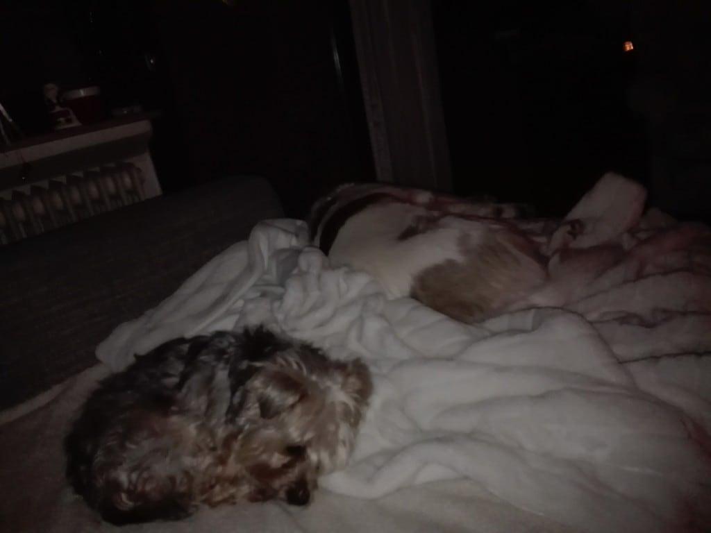 Hunde Foto: Susanne und Marley und Dino - mein tägliche Kampf ums Sofa