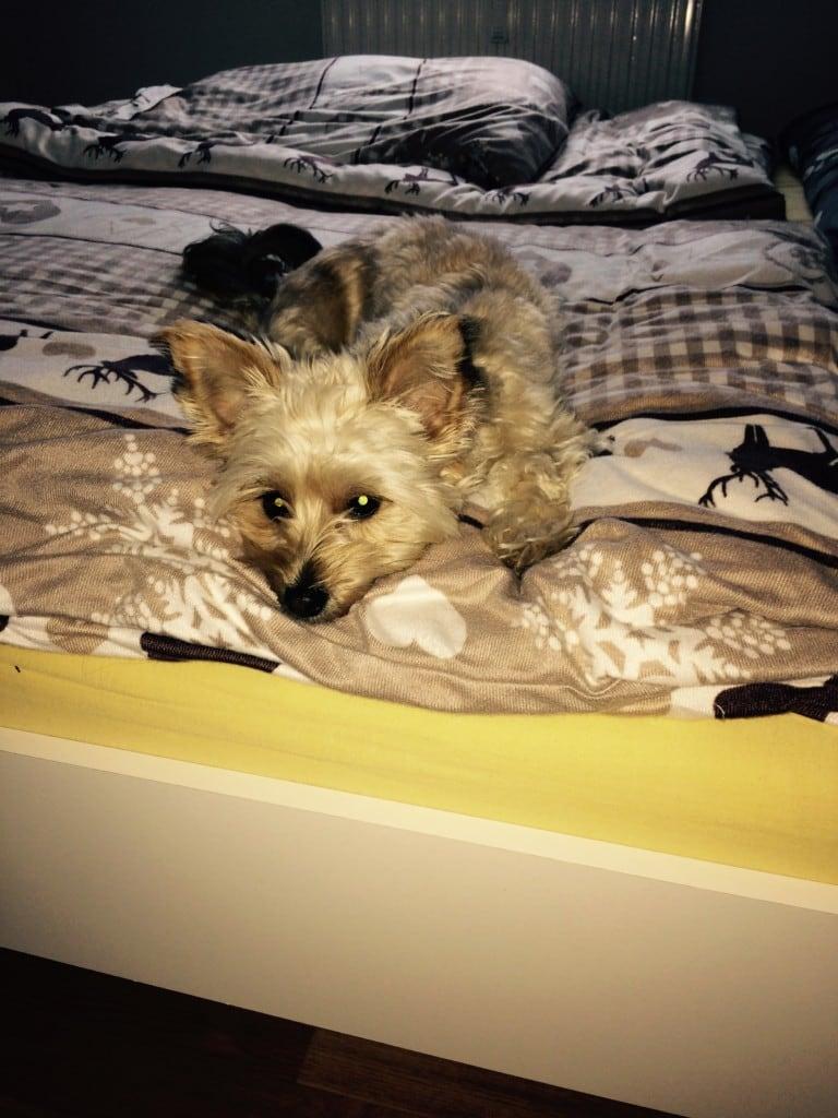 Hunde Foto: Diana und Maya - Entspannung pur❤️