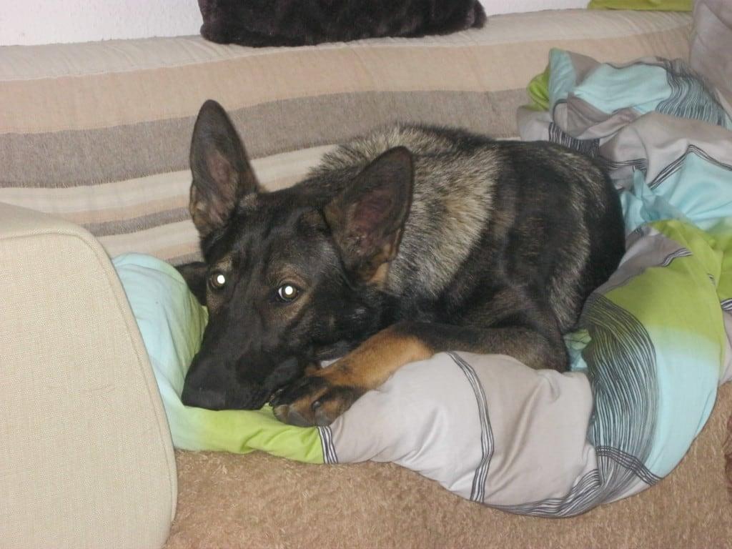 Hunde Foto: Tanja und Shakira vom Gsiberger - Guten morgen !!!!!!!!!