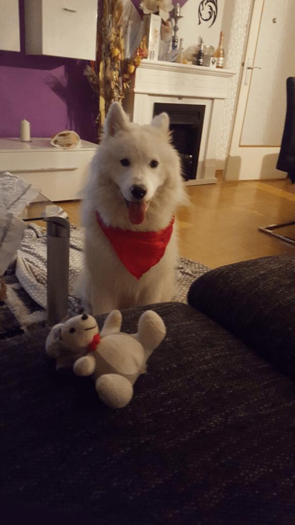 Hunde Foto: Sanela und Medo - Mr.