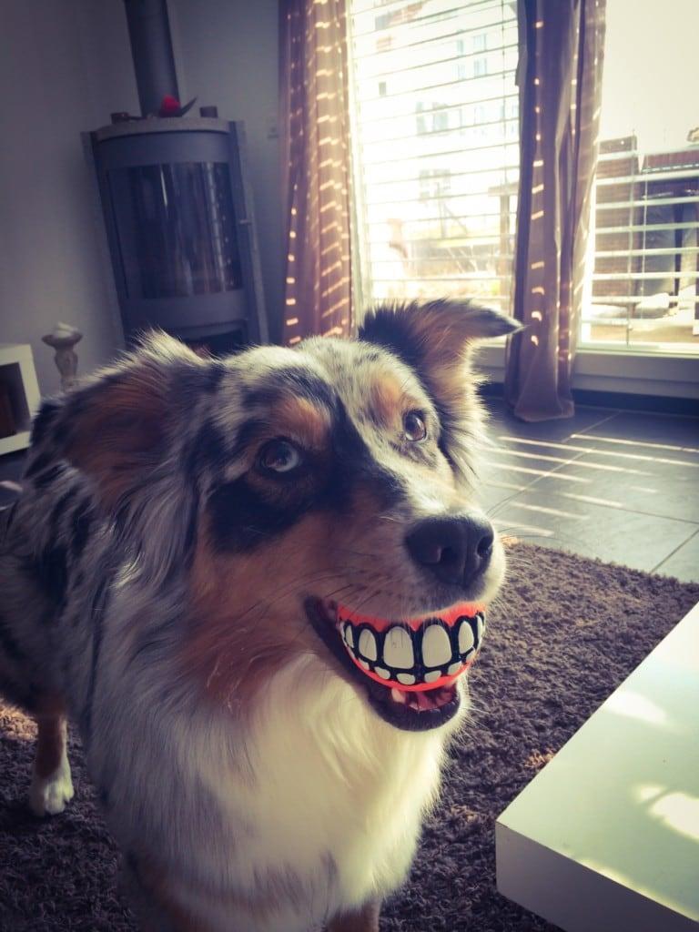 Hunde Foto: Bianca und Mila - Keep Smiling :)