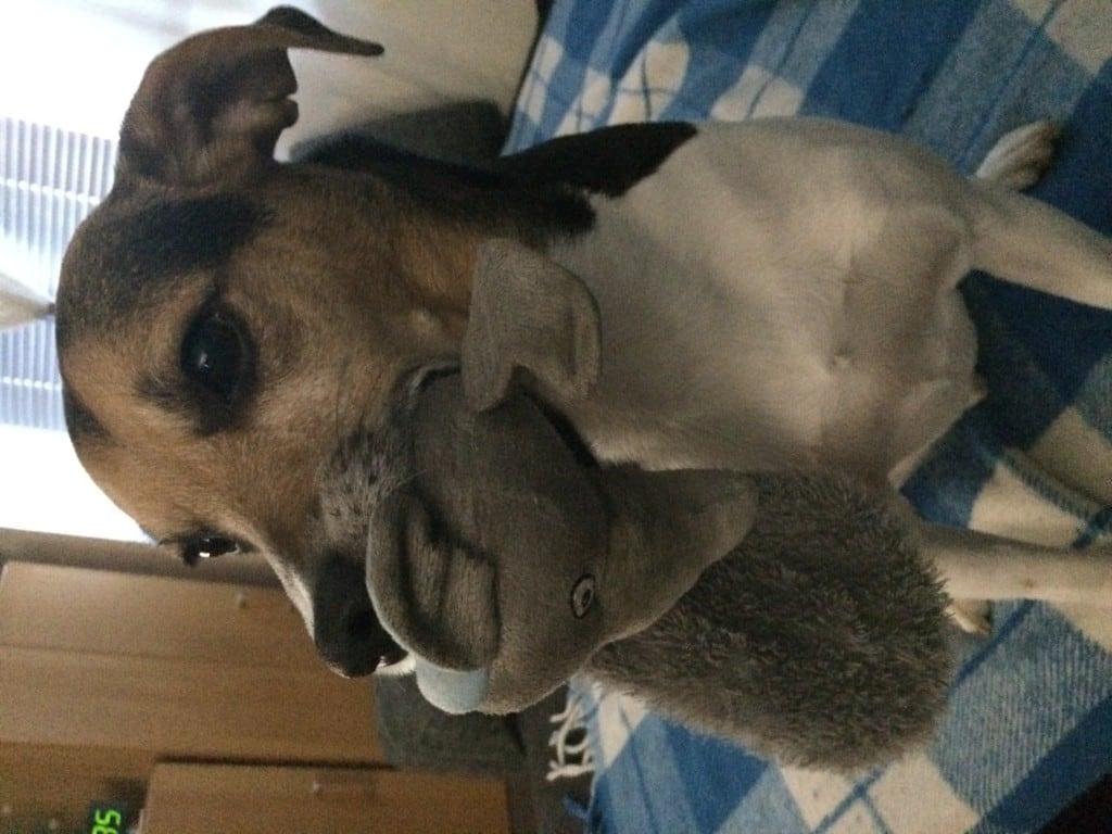 "Hunde Foto: Nadine und Jackie - Jackie mit ""Beute"""