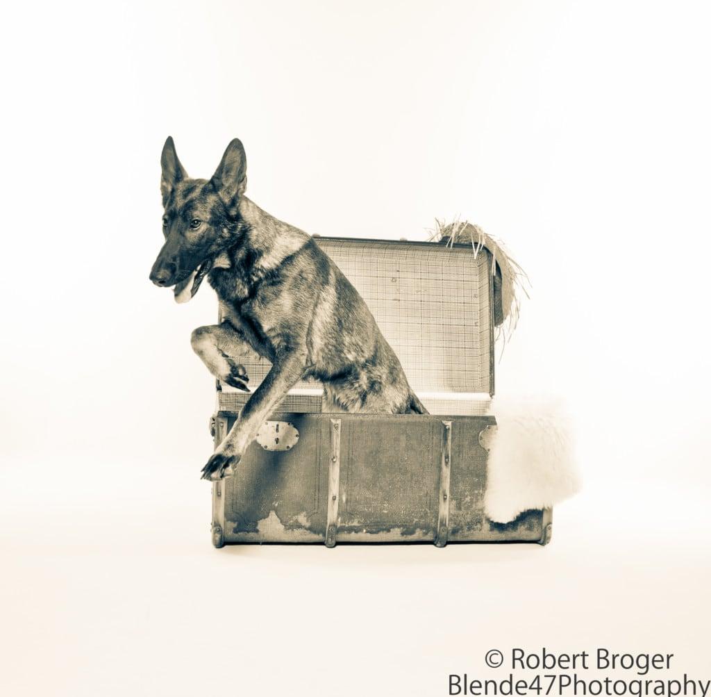 "Hunde Foto: Tanja und Shakira vom Gsiberger - "" Überraschung """