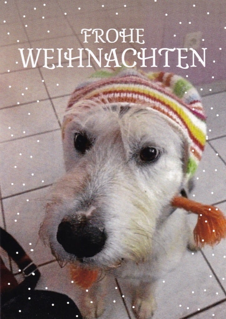 Hunde Foto: Herbert und Molly - Frohes Fest