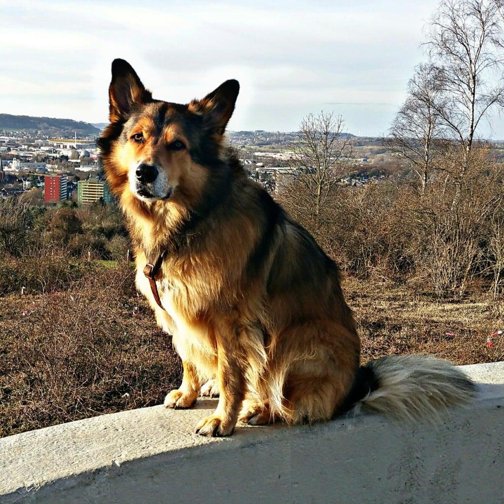 Hunde Foto: Micha und Mogli - Warten aufs Chriskind