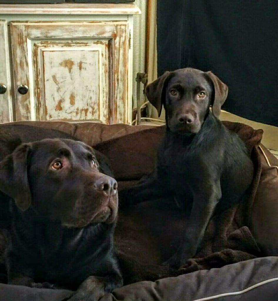 Hunde Foto: Manuela und Johnny und Walker - Ob Mama und Papa das Bild gefällt.... ?