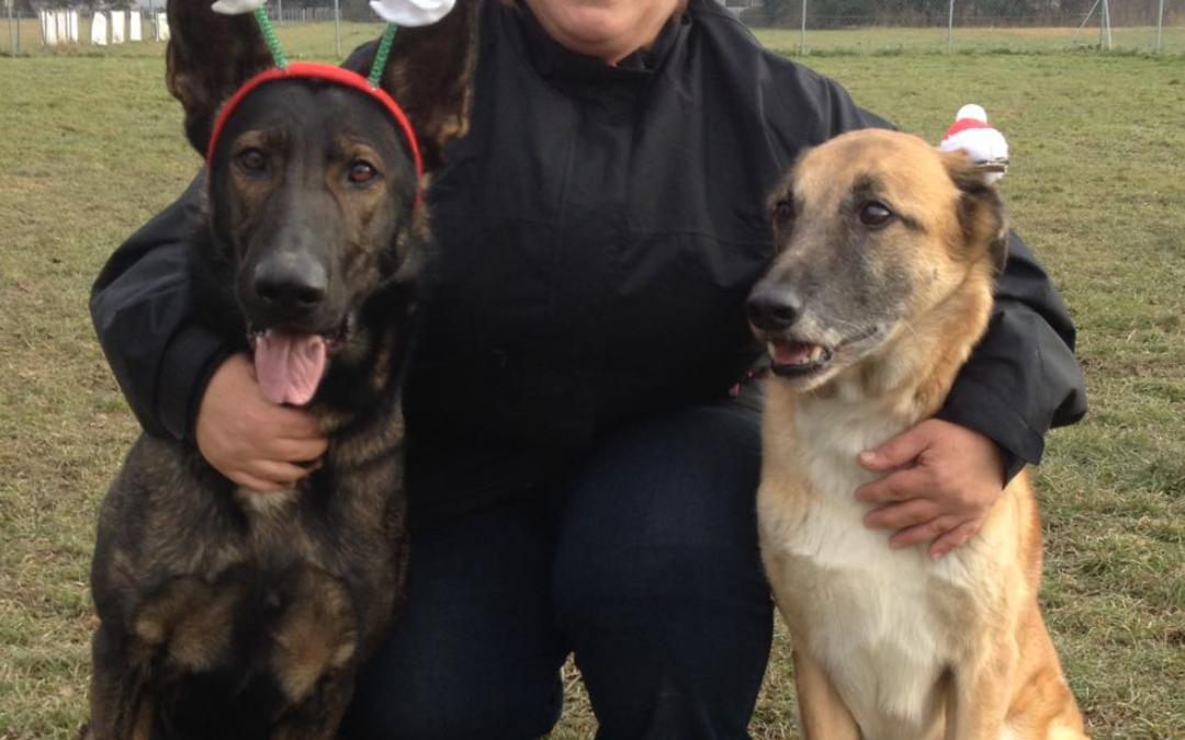 """Hunde Foto: Tanja und Flash & Shakira – """" Frohe Weihnachten allen """""""