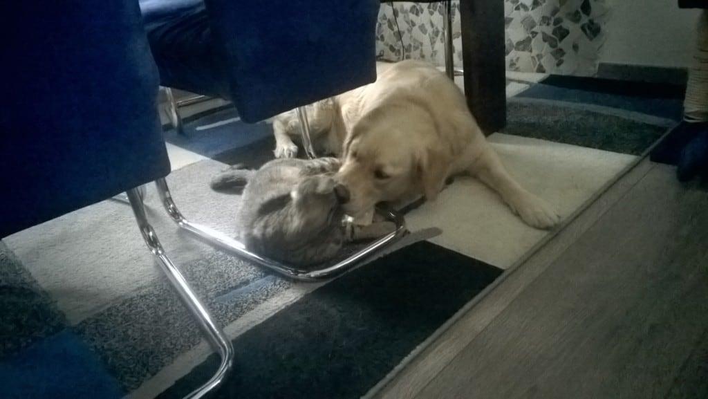 Hunde Foto: Doris und Samy - Hund und Katz in Love