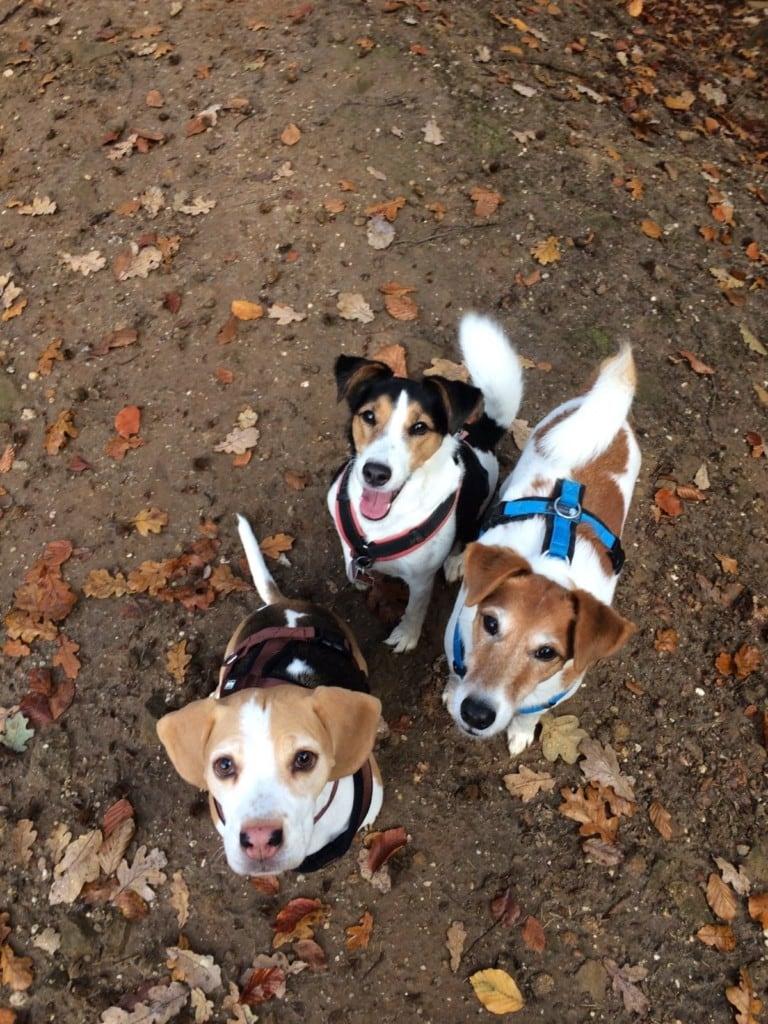Hunde Foto: Monika und Joschy, Lilly und Luna - Meine Rasselbande