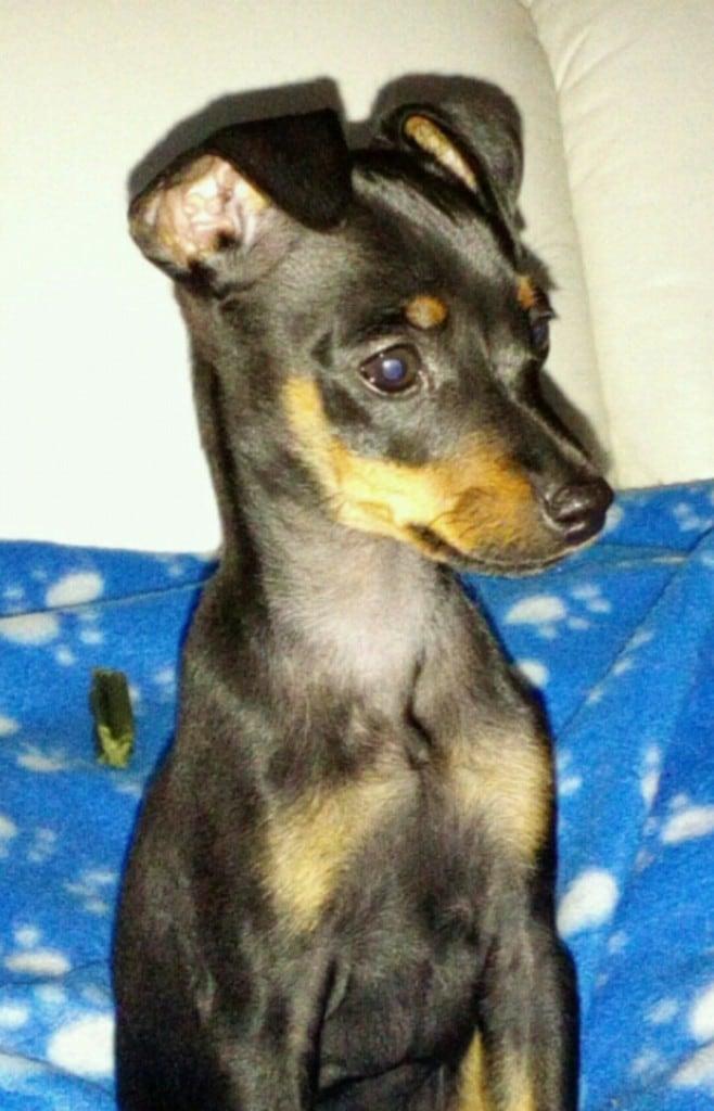 Hunde Foto: Sandy und Zeus - Der große Zeus in Kleinformat ?