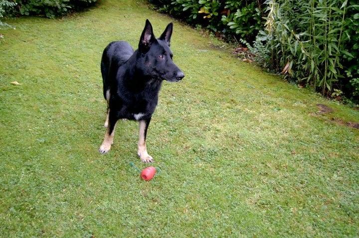 Hunde Foto: Irene und Bronco - Verspielter kamerad