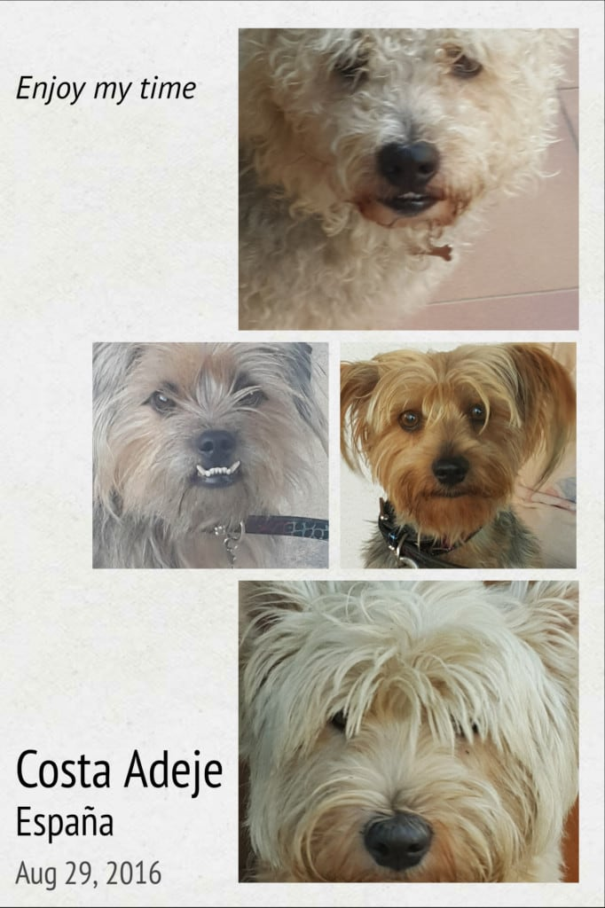Hunde Foto: Patricia und Didi, Jack,Ari u. Tommy - Security Costa Adeje-Teneriffa