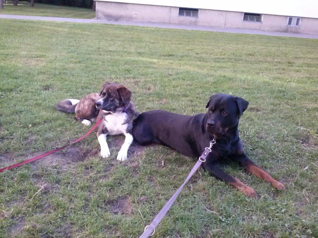 Hunde Foto: Gaby und Nico & Nikita - Meine zwei Babys