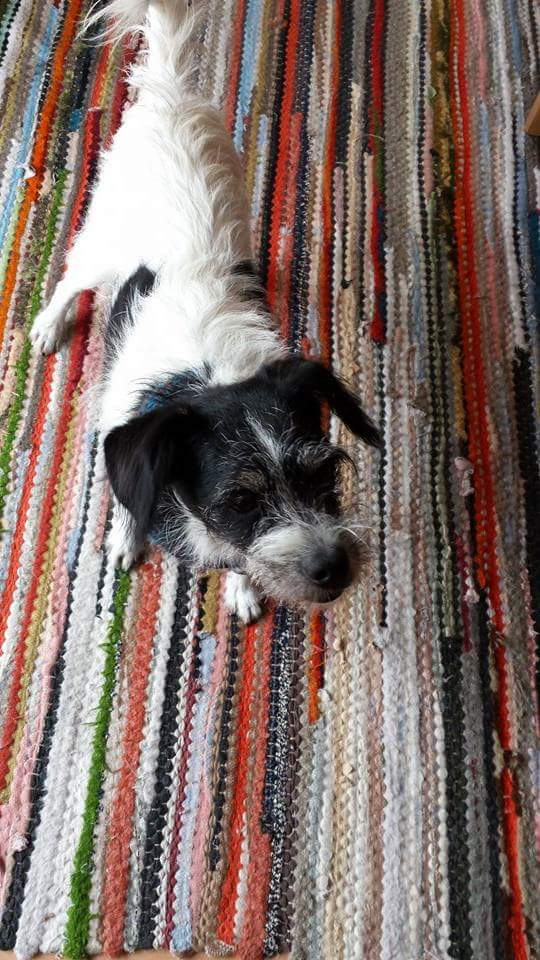 Hunde Foto: Gerhard-Michael und Charly - Ich hab's faustdick hinter den Ohren
