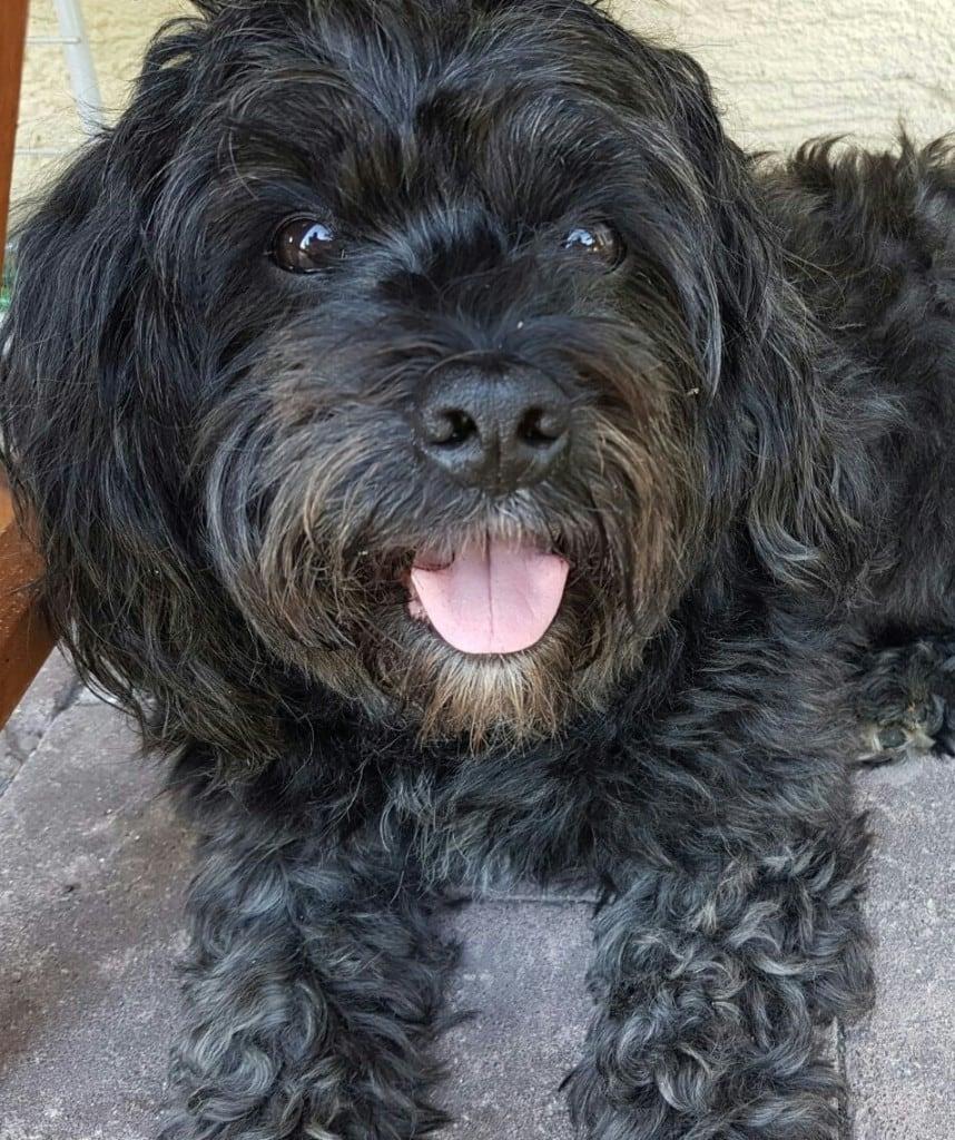 Hunde Foto: Hannelore und Pasha - Meine grosse Liebe