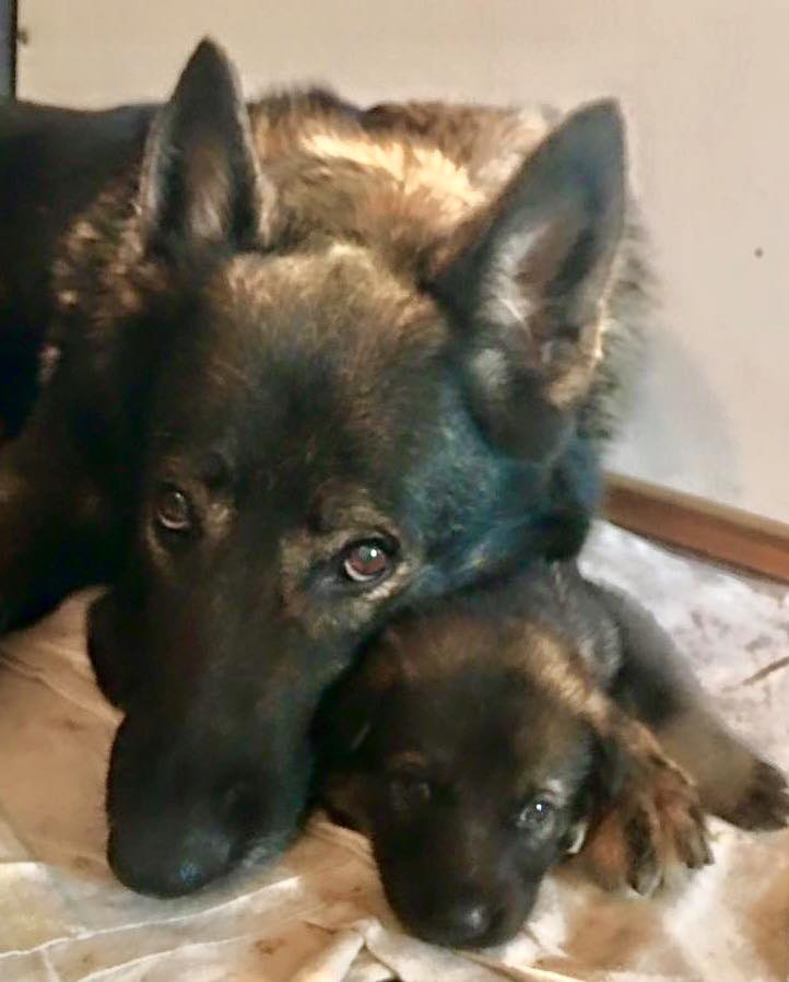 Hunde Foto: Tanja und Emma - Mein Töchterchen Kenia......